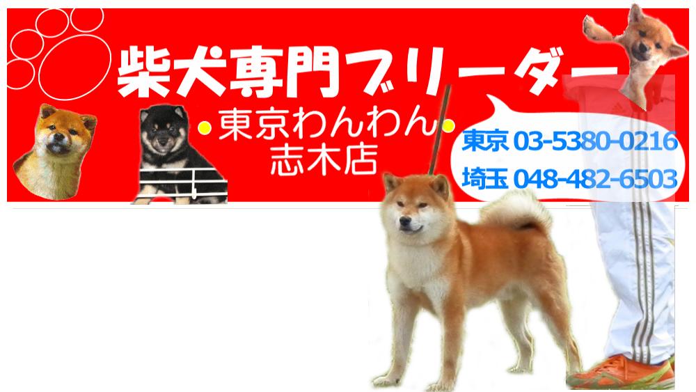 里親 埼玉 子犬